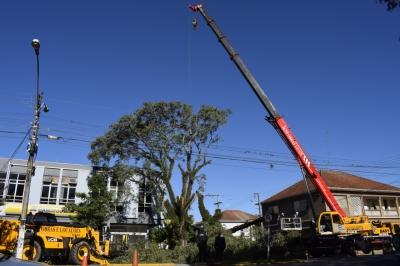 Operação retira árvores em situação de risco no centro da cidade