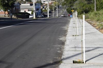 Agricultura inicia plantio de árvores no perímetro urbano