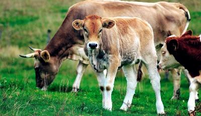 Agricultura irá retomar as castrações em março