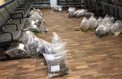 Emater entrega cerca de 5 mil alevinos na manhã desta terça-feira (23)