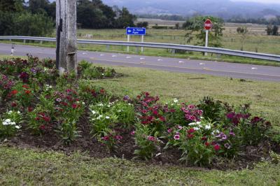 Secretaria de Agricultura conclui plantio de flores no perímetro urbano