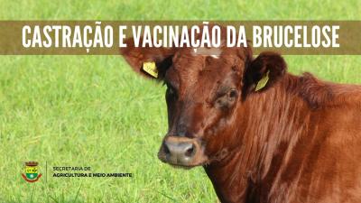 Agricultura divulga cronogramas de castração e vacinação da brucelose