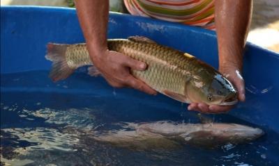 Feira de peixe vivo acontecerá no dia 31